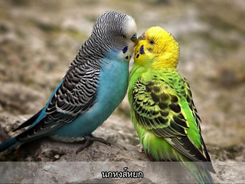 Bird Cabin so
