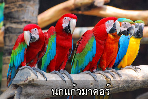 all post bird